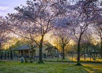 Dierenpark Plein
