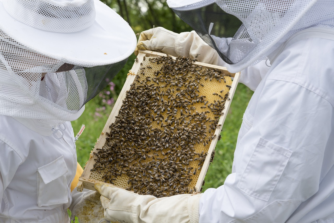Imker, Bijen