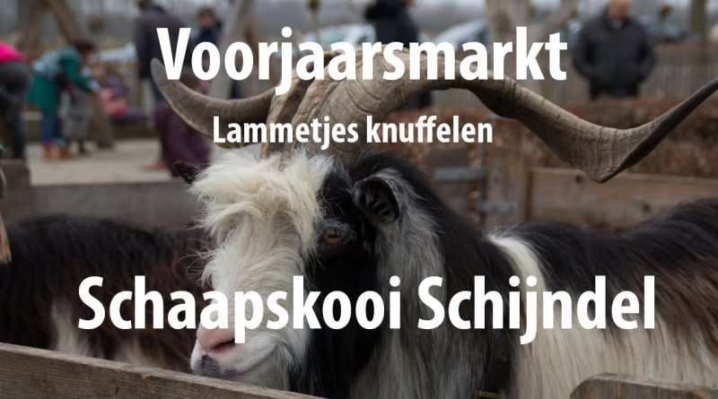 Schaapskooi-Schijndel_voorjaarsmarkt
