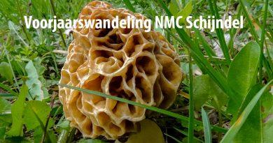 NMC-Schijndel_voorjaarswandeling