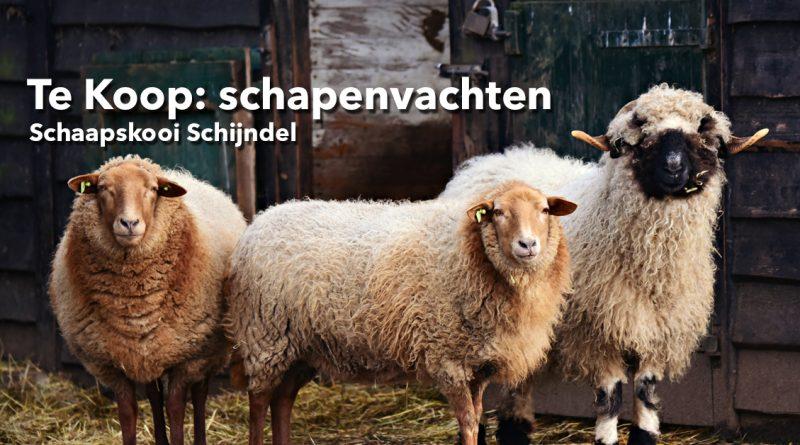 Schaapskooi-Schijndel_vachten