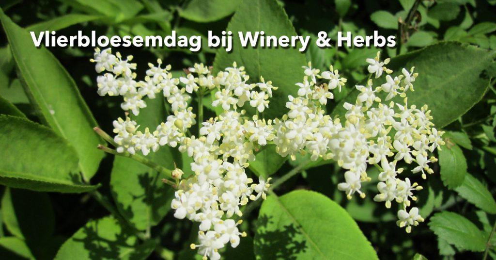 Winery&Herbs_vlierbloesemdag