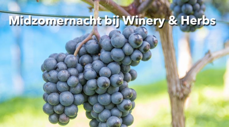 Winery-and-Herbs_midzomernacht