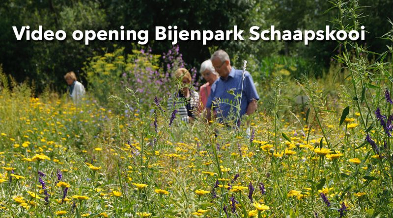 Video opening Bijenpark Schaapskooi