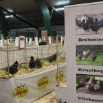Foto's kleindierententoonstelling en prijsuitreiking ESKV