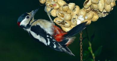 Vogel-eten