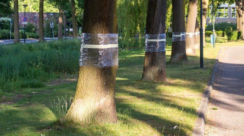 Bomen plastic