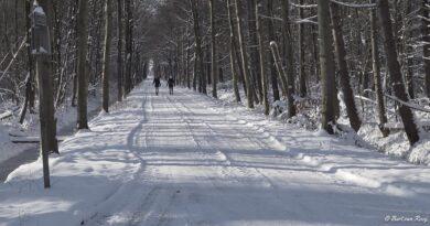Terugblik op een week vol sneeuw en ijsplezier in Wijbosch